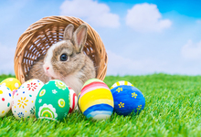 цены Laeacco Easter Photography Backdrops Egg Rabbit Grassland Portrait Scene Baby Children Photographic Background For Photo Studio