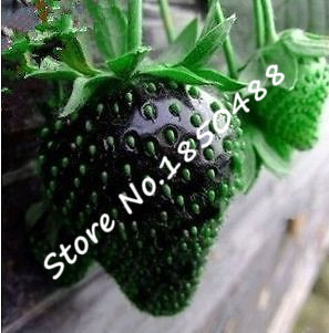 Black Strawberry Seeds Sweet Fruit  plants Seeds for home & garden