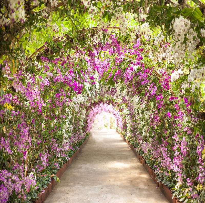 10x10FT Sunshine Violet Flowers Blossom Branch Tunnel Path