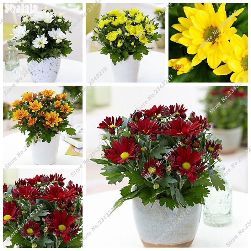 Купить саженцы цветов