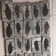 Удивительные коллективные китайские натуральные рыбы из Хань для украшения дома FMX