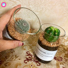 Potted plant cactus radiation-proof desk plants flowers perennial easy to plant decorative plants