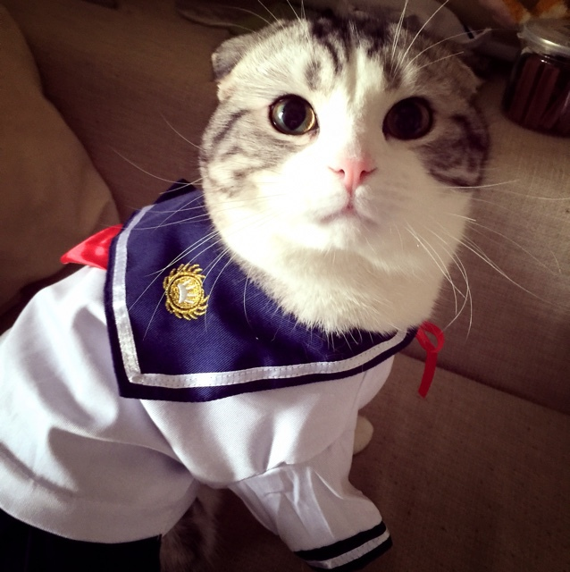 Cat clothes, school uniforms Japan skirts for pet, sailor suit ...