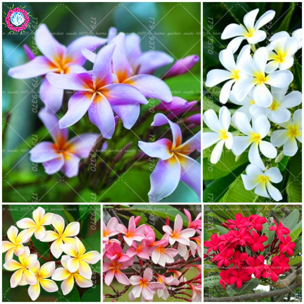 Buy Plants Tropical And Get Free Shipping On Aliexpress