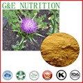 MILK THISTLE. used as a drug for the treatment of liver disease and cardiovascular disease milk thistle extract 200g