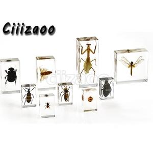 Image 2 - A coleção taxidermia animal do peso de papel do espécime do esqueleto do morcego encaixou no bloco claro do lucite que incorpora o espécime