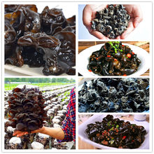 200 Pcs Organic Delicious Black Chinese Mushroom plant Green Vegetables Bonsai flores Very Easy To Grow Healthy garden(China)