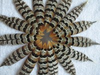 Free shipping 100pcs precious wild turkey feathers Collect diy hot natural good 10-15cm/4-6inch natural color Scarce