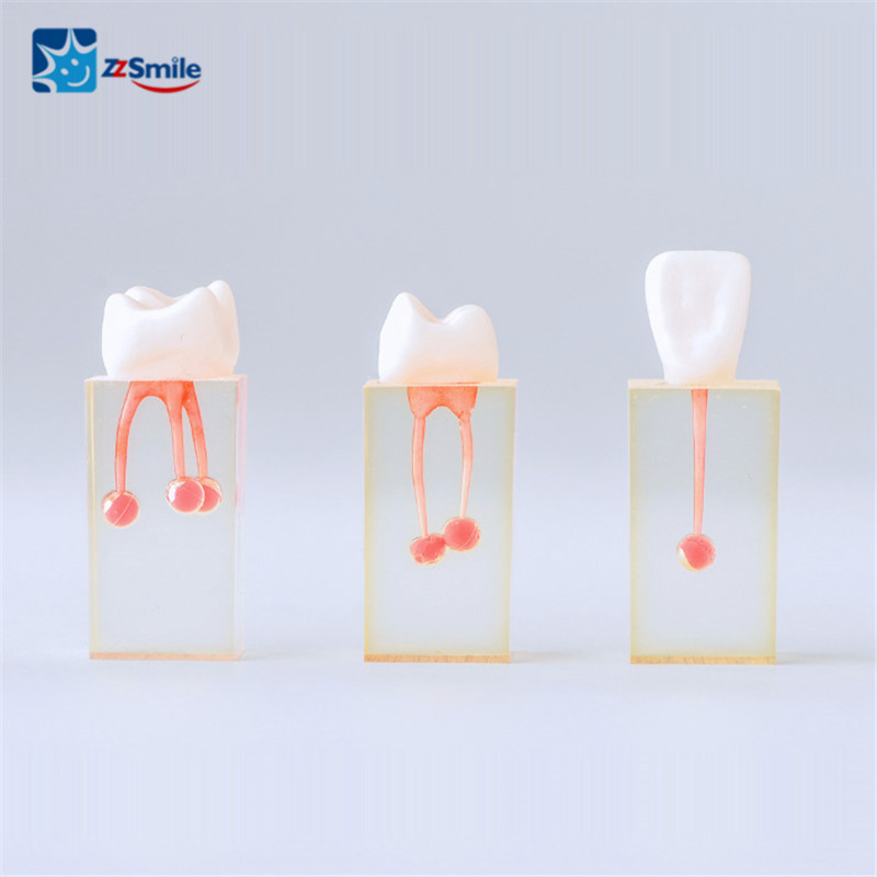 Root Canal Endo Training Block M8004 Dental Teeth Model