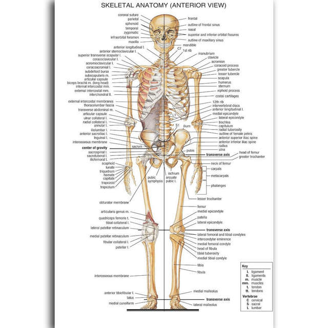 G2535 Human Body Structure Anatomy Information A4 Art Poster Silk