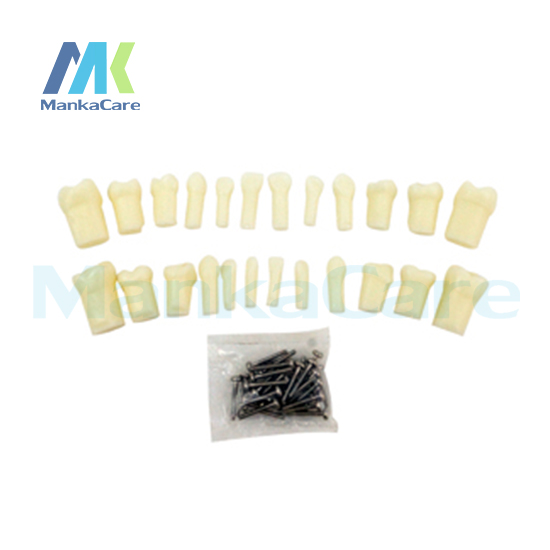 Manka Care Primary Teeth With Straight Rootsanatomy Crownstraight