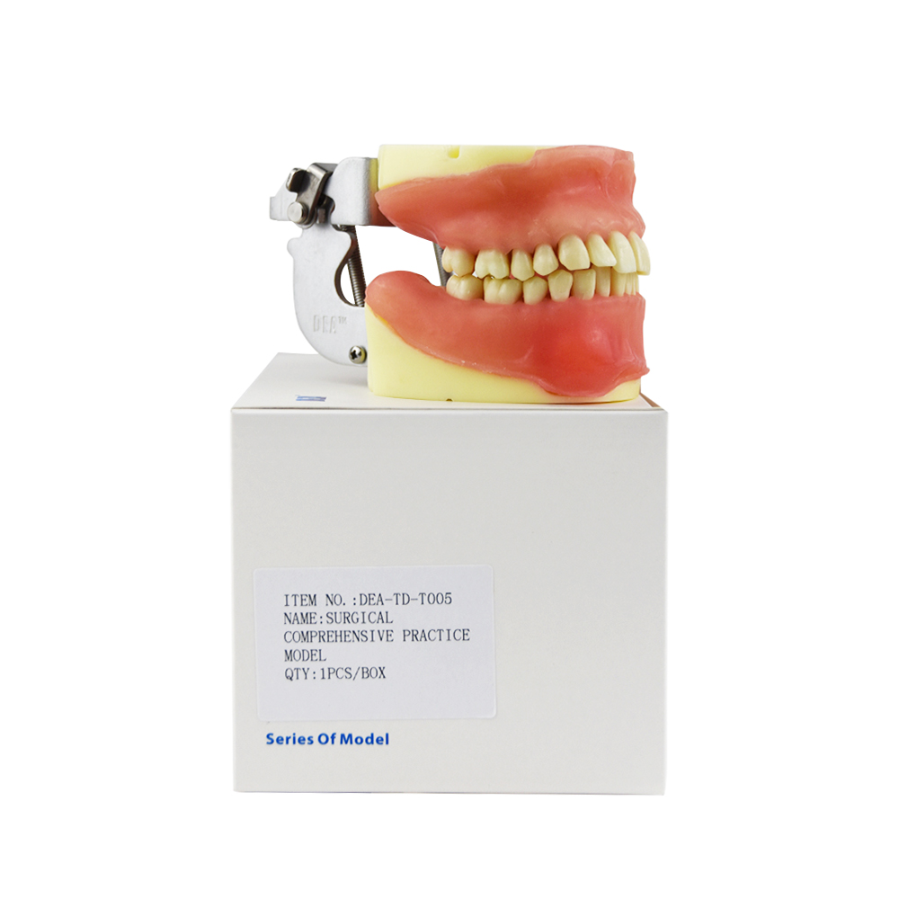 Teeth Model Dental Surgical Integrated Model For Oral Surgery Practice In Clinical Operations Medical Science Teaching Study cmam nasal01 section anatomy human nasal cavity model in 3 parts medical science educational teaching anatomical models