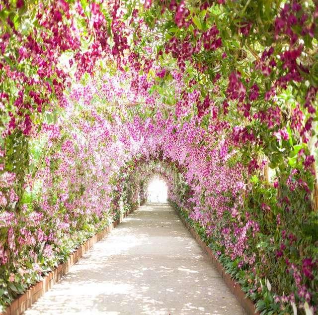 TR Printemps Parc Jardin Fleurs Porte Arc Chemin Amant Marier Route ...
