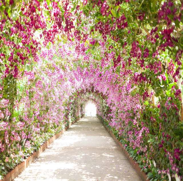 TR Spring Park Garden Flowers Door Arch Path Lover Marry Road Photograph  Backdrop Wedding Backgrounds For