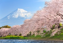 Laeacco Mountains Snow Spring Cherry Blossoms Scenic Photography Backgrounds Customized Photographic Backdrops For Photo Studio