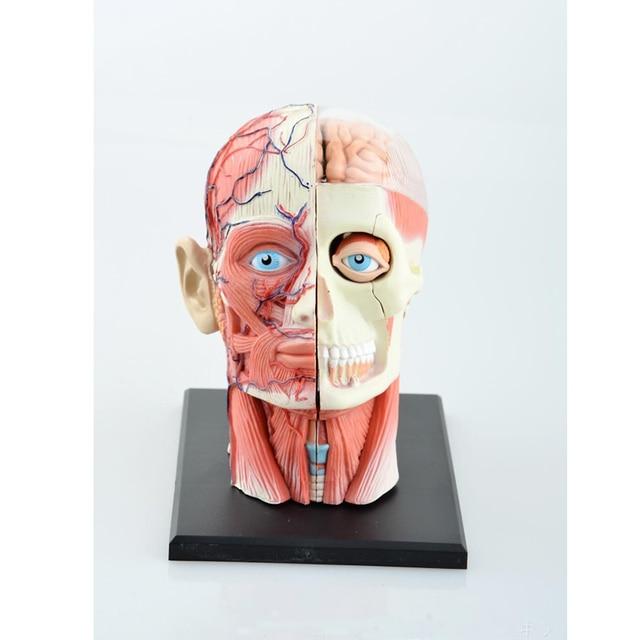 Science Toys Dental Lab Dentist 4DMaster Human Head Anatomy Medical ...