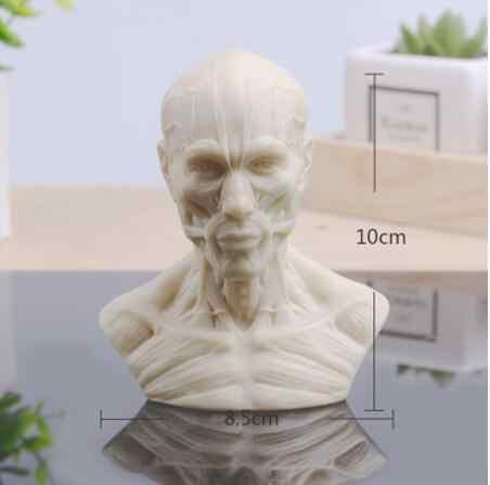 卸売 10 センチメートル人間の筋肉ヘッドマネキン彫刻、静物描画、参照頭蓋骨モデル、芸術バスト、造園 M01009