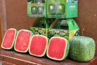 100 Seeds/bag square  Watermelon seed  Fruit Seeds home&garden  Bonsai Plant   semillas de plantas Free shipping with a gift