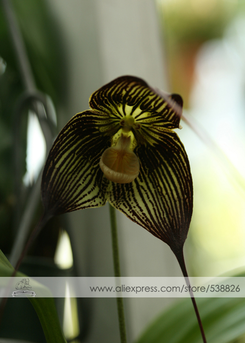 Flowers Look Like Animals People Monkeys Orchids Pareidolia