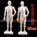 human body Acupuncture model rubber Easy to carry Manhunt Engilsh/Chinese