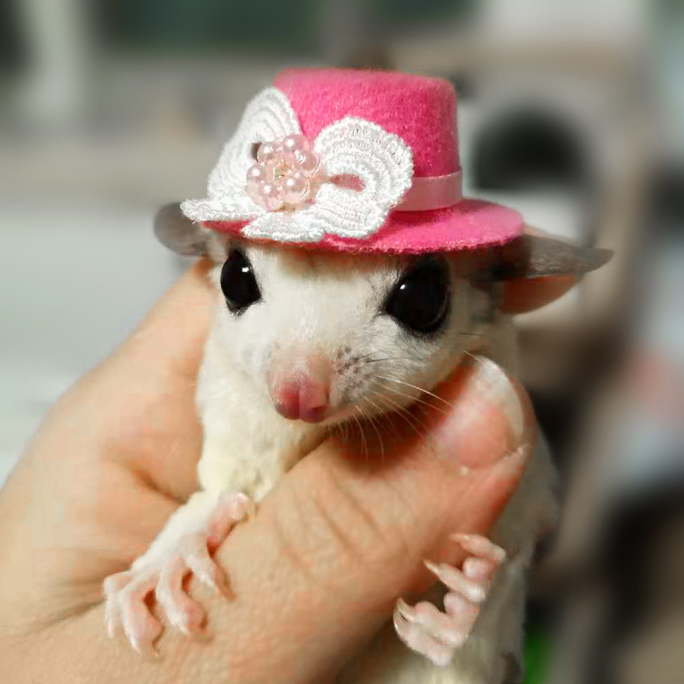 Honeybags Hats Hamsters Hand-woven Cute Animal Shapes Matching Hats Cartoon Hats Hamster Harness