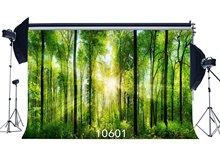 خلفيات للتصوير الفوتوغرافي خرافة الغامض الغابات أشعة الشمس المشهد سلس حديثي الولادة الصغار صور خلفية