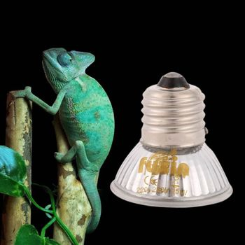 Pet Reptile Spotlights
