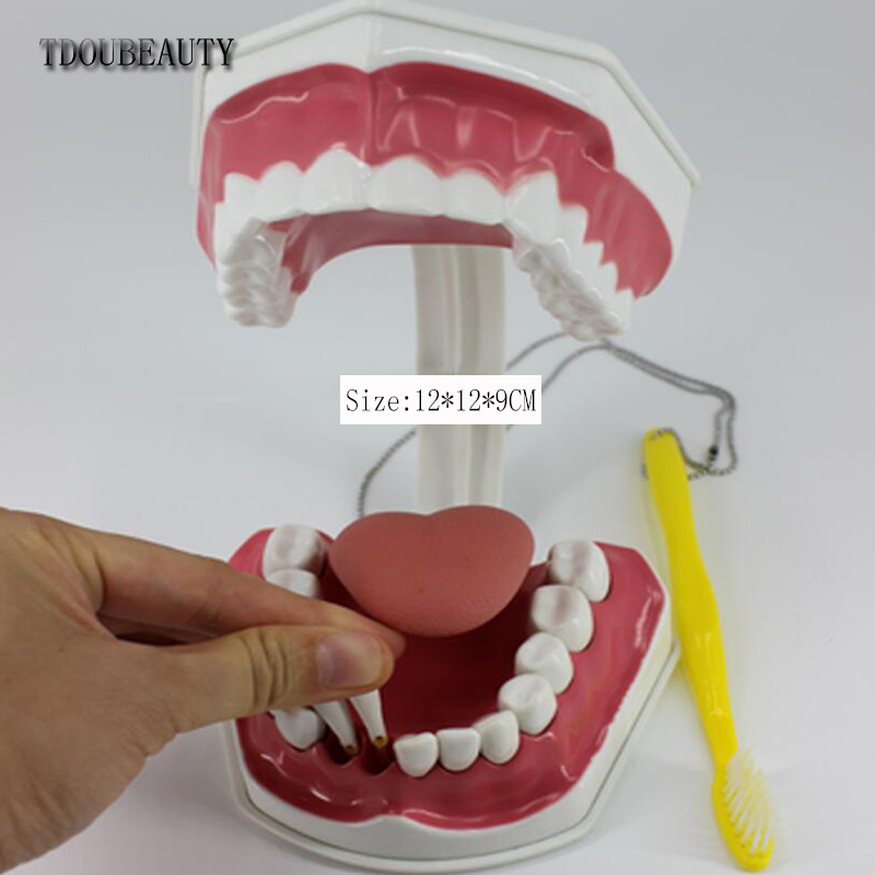 TDOUBEAUTY Adult Dental Teeth Model And Toothbrush With Removable High-Grade Teeth Teaching Model (With Tongue)Free Shipping