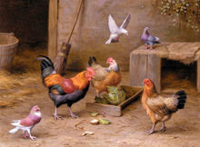 Wonderful Oil painting Poultry domestic bird cock with hens and pigeon canvas