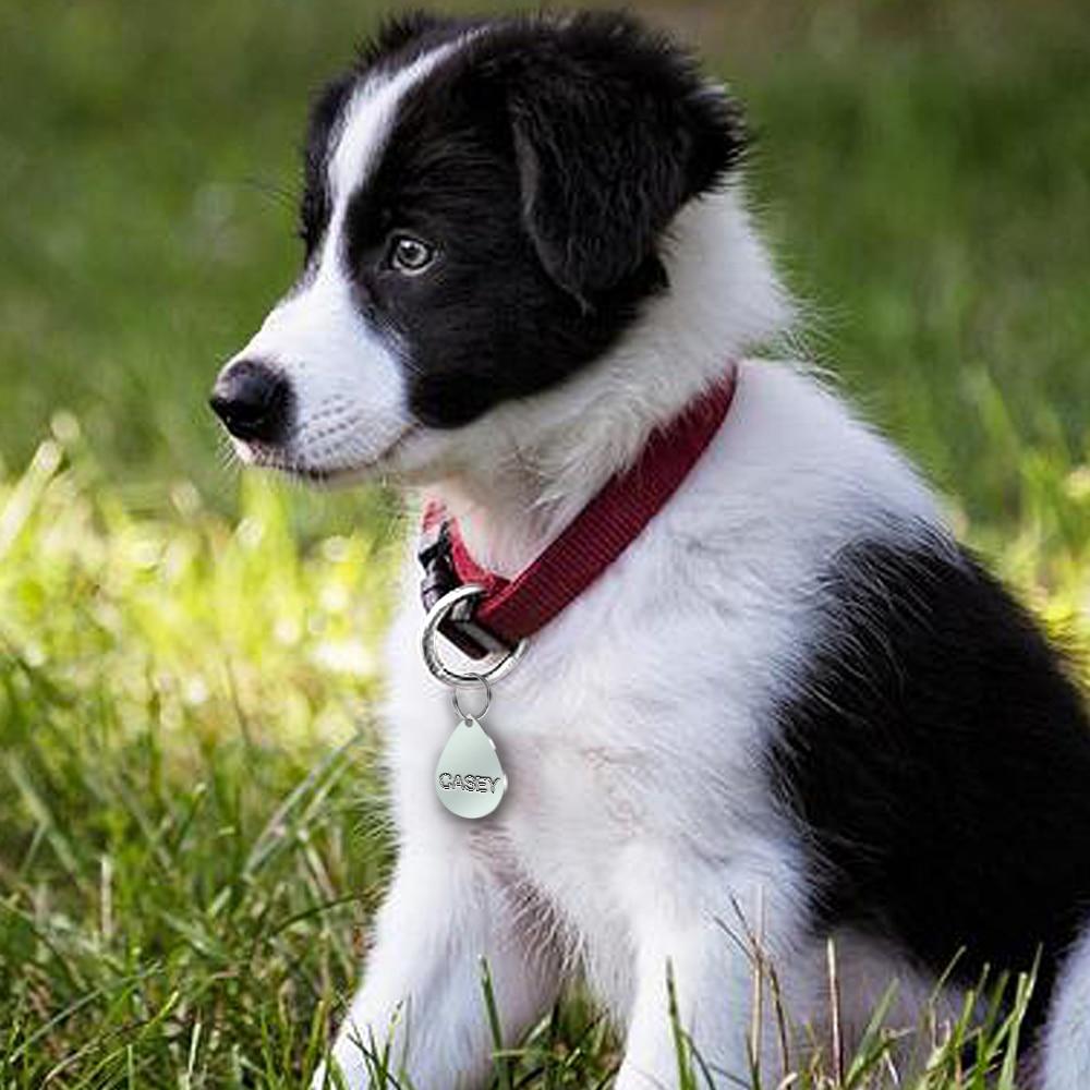 Stainless Steel Engraved Id Tag Brava Hund