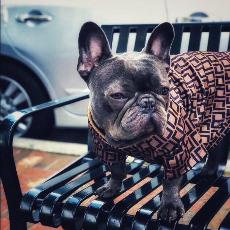 French Bulldog Fashion Print Sweater Chihuahua Pug Summer Tshirt Pet Dog Clothes For Small Dogs Petsclothing Yorkshire PC0900