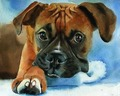 Boxer  DOG ORIGINAL art - TOP pop art oil painting--24 inch art painting # TOP animal Decor OIL ON CANVAS