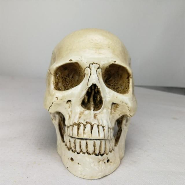 Human Head Resin Replica Medical Model Lifesize Halloween Home Decoration Decorative Craft Skull 22x15x17CM 4