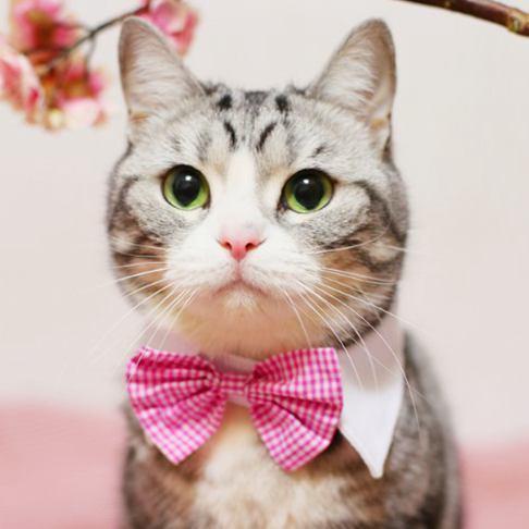 Velcro Bow Tie, Checkered Design Cat Tie