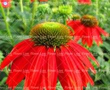50PCS Echinacea Seeds