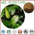 500g Natural Gymnema sylvestre/Gymnema sylvestre schult/Meshashringi Extrato com frete grátis
