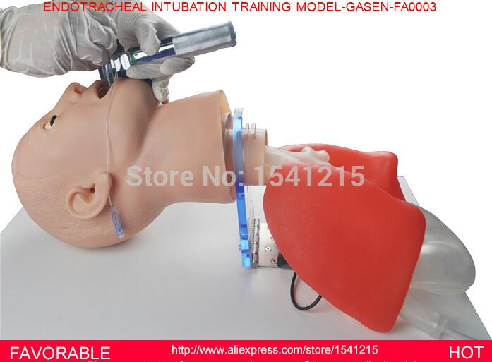 MULTI-FUNCTIONAL AIRWAY MANAGEMENT MODEL, ENDOTRACHEAL INTUBATION TRAINER,ENDOTRACHEAL INTUBATION TRAINING MODEL-GASEN-FAM0003 iso economic newborn baby intubation training model intubation trainer