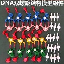 Model componenten van DNA dubbele helix structuur Chromosoom structuur model component nucleotiden