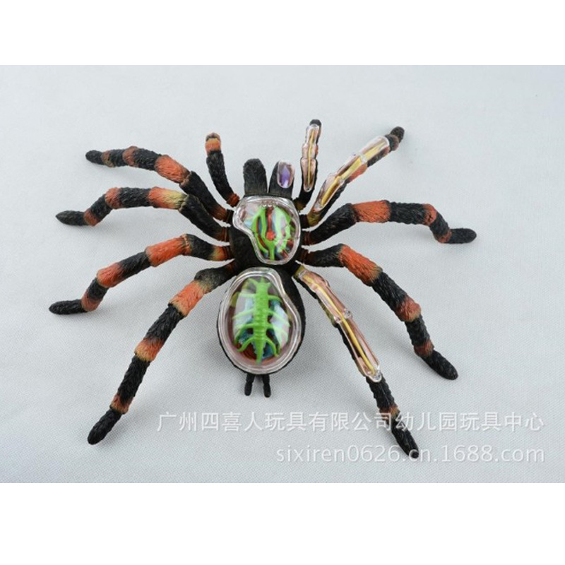 New Assembled Animal Anatomy Spider Model Anime Medical Science ...