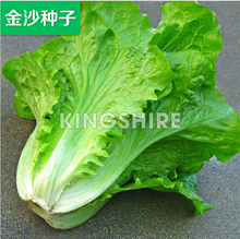 1 original pack 10g 500+Vegetable seeds ,Italy resistant bolting Leaf Lettuce Seeds,  balcony potted plants  free shipping