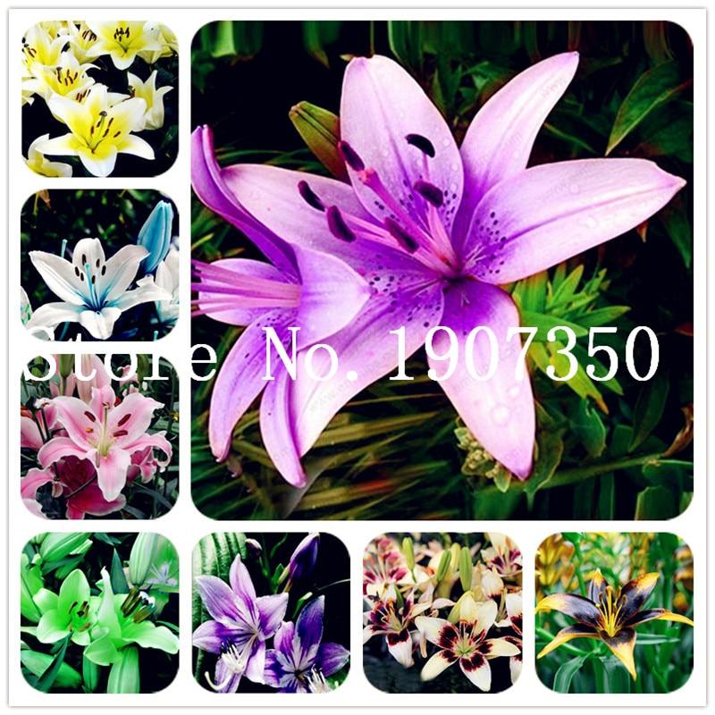Smukke store Bonsai Lily Flower 200 stk Farverige liljer Bonsai Ingen Lilies Lampe Sjældne potteplanter Hjem Havearbejde DIY Blomst