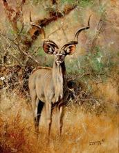 Animals antelope  canvas painting leopard portrait modern decoration art frameless mural prints free shipping