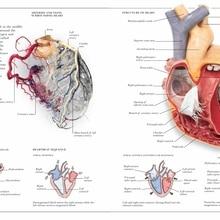 Cartel de enciclopedia de Anatomía Humana Vintage, cuadros de lienzo clásicos con corazones, carteles de pared Vintage, pegatinas para decoración del hogar, regalo