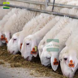 Овца вся ферма дизайн все оборудование поставка животноводства продукты животных пол миска для питьевой воды Ушные бирки шерсть ножницы
