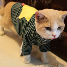 A striped sweater Star Pet British short Siam cat feet Puppy Cat clothes in winter dress shirt sleeve cotton