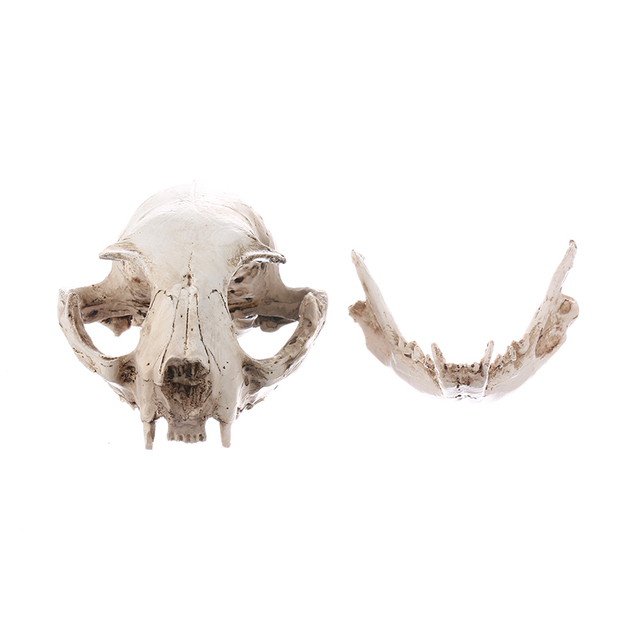 Katze Schädel Modell Harz Tier Skeleton Schädel Ornamente Halloween ...