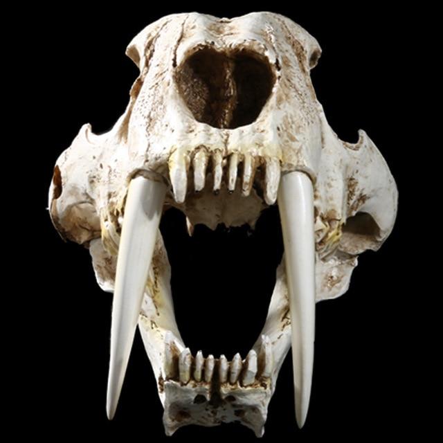 0135cec6d Simulation Animal smilodon Head Skull Resin Crafts Specimen Medical Scary  Home Decoration Skeleton Model Aquarium Decor