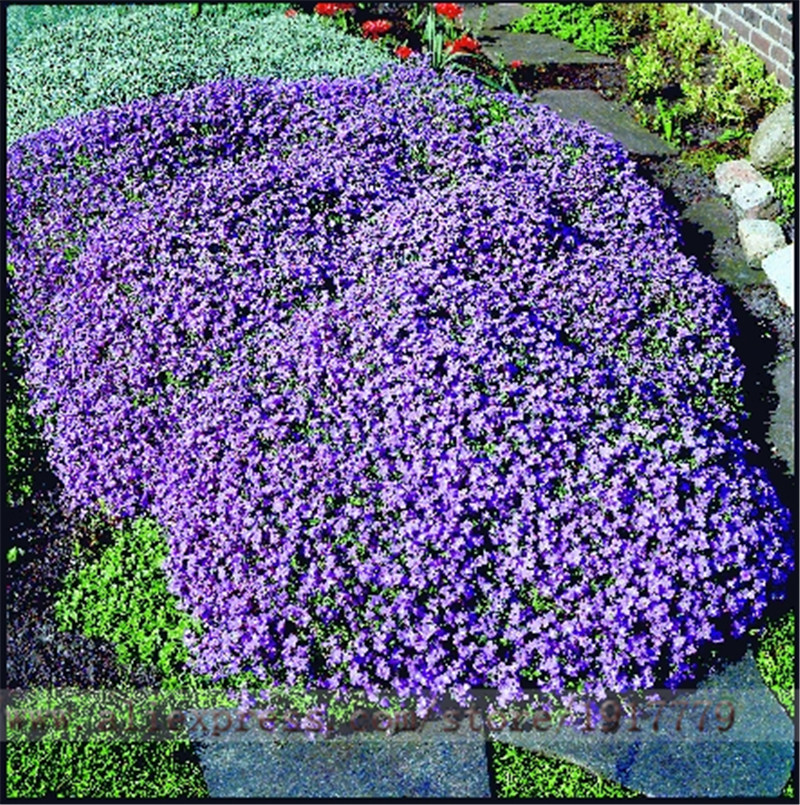 Online Get Cheap Purple Ground Cover