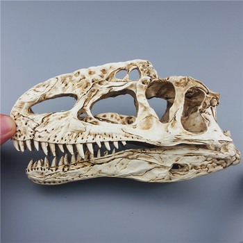 2018 Top Fashion Limited Mrzoot Resin Dinosaur Skeleton Model Monocervus Specimen Animal Research Teaching Decoration