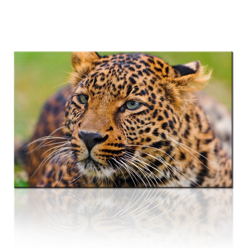 African Safari Animal Art Prints Leopard Cheetah